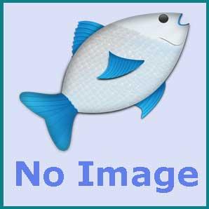 XY-380 Bio - chemical sponge filter ( upto 500 litre )